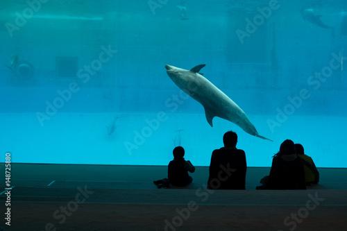 Valokuva Family watching captive dolphin performing in large aquarium