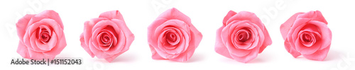 Photo pink roses