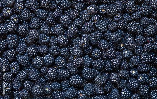Background from fresh Blackberries
