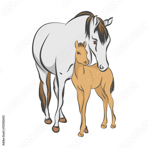 Fotografia The grey horse and her foal