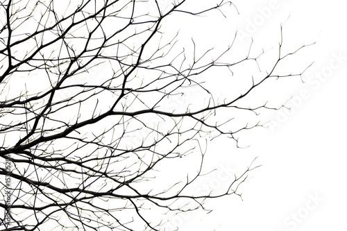 Fényképezés tree branch silhouette photography , white background