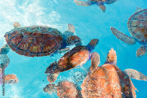 Sea turtles looking from the water in the reserve