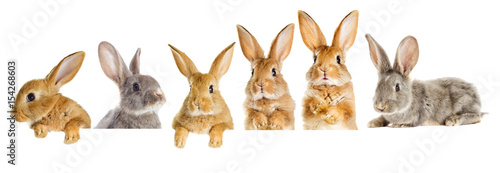 Leinwand Poster A set of rabbits peeking