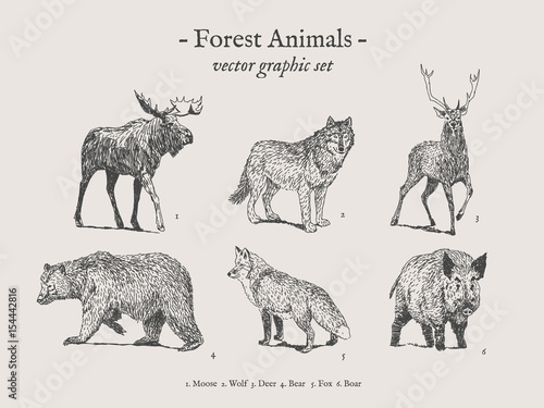 Fotografia, Obraz Forest animals drawings set on grey background with moose, wolf, deer, bear, fox