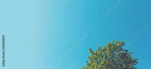 Photo Minimalist tree top with sky background