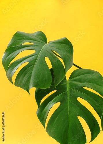 Canvas-taulu monstera leaf