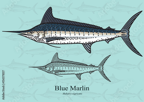 Canvas Print Blue Marlin, Squadron