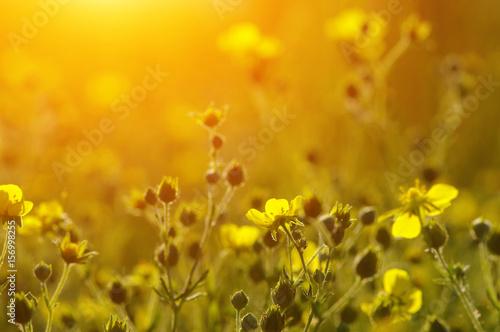 Spring flowers on sun