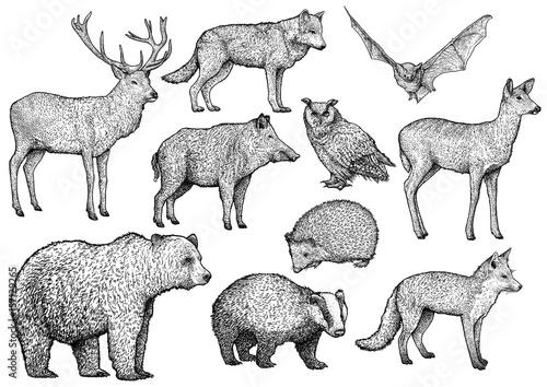 Wallpaper Mural Forest animal illustration, drawing, engraving, ink, line art, vector