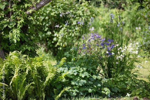 Obraz na płótnie Plant area in the garden