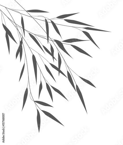 Fototapeta Zwisające pędy i liście bambusa