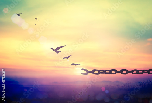 Fotografia World environment day concept: Silhouette of bird flying and broken chains at au