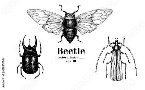 Fotografía Vector retro hand drawn beetle set