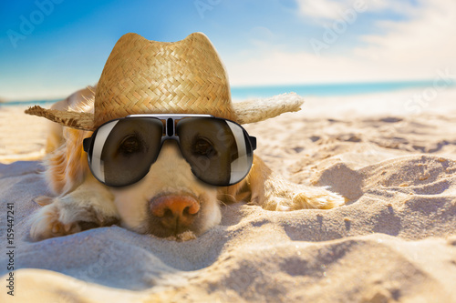 dog retired at the beach #159447241