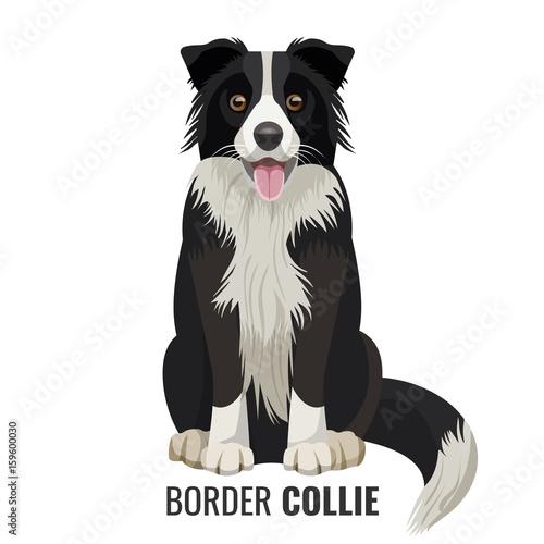 Leinwand Poster Border Collie pet isolated on white vector illustration