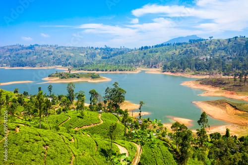 Canvas Print Tea plantation, Sri Lanka