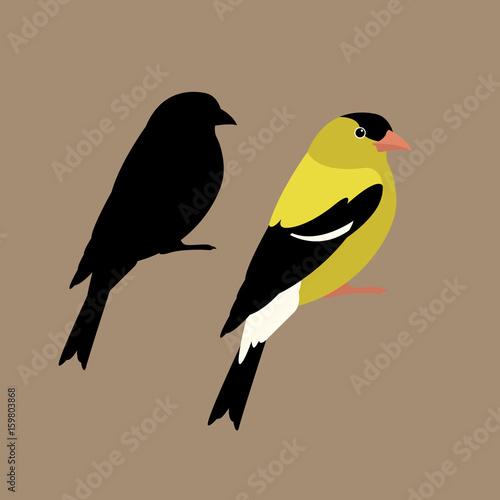 Fotografia american goldfinch  vector illustration style Flat side set silhouette