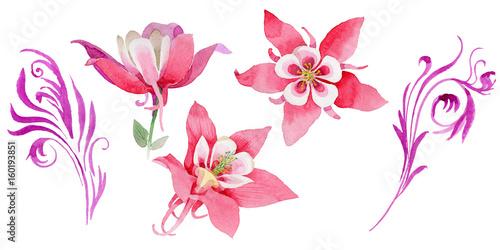 Slika na platnu Wildflower aquilegia flower in a watercolor style isolated.