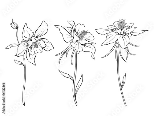 Canvas Columbine flowers