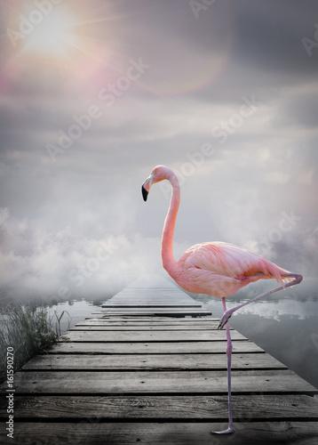 Flamant rose monde imaginaire