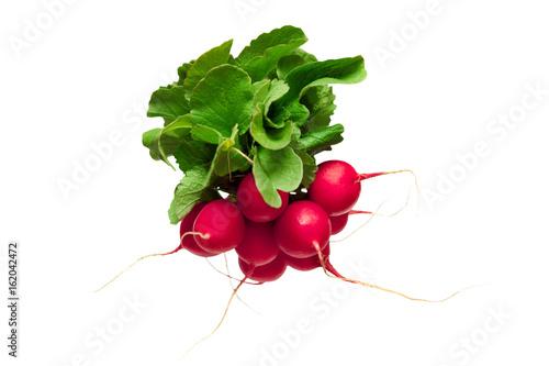 Radish vegetable isolated on white