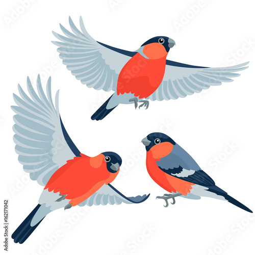 Fotografiet Bullfinches on white background / There are one sitting bullfinch and two flying