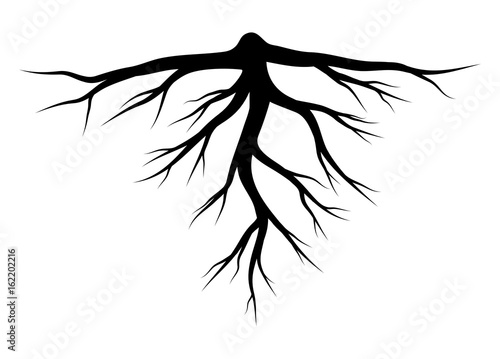 Canvas Print root silhouette vector symbol icon design.