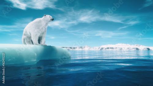 Foto Polar bear