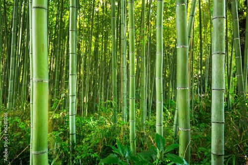 Slika na platnu Bamboo forest of Arashiyama near Kyoto, Japan