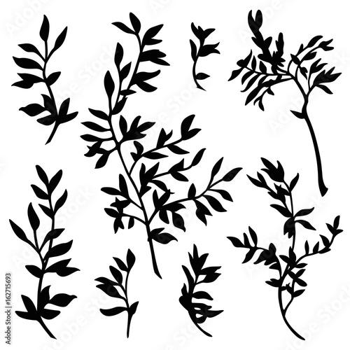 Fotografia branches silhouette vector set
