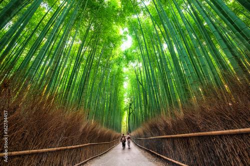 Fototapeta premium Ścieżka Sagano, Kioto, Japonia