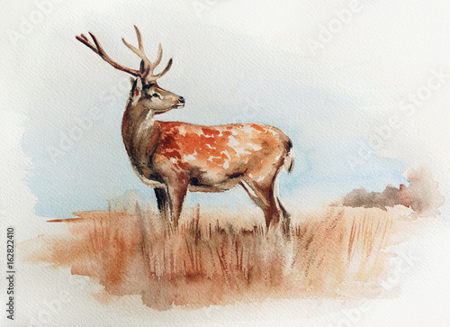 jelenie w polu - akwarela malarstwa dzikiej przyrody z szczegółowe tekstury papieru