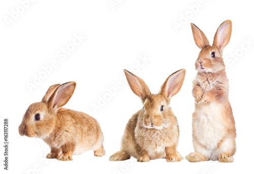 The funny rabbit is standing on its hind legs Fototapet