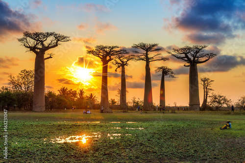 Fotografiet Beautiful Baobab trees at sunset at the avenue of the baobabs in Madagascar