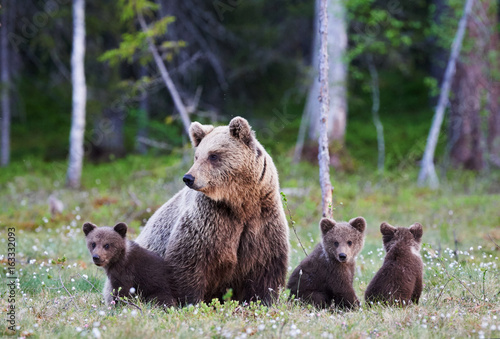 Canvas Print Mummy bear and her three little puppies