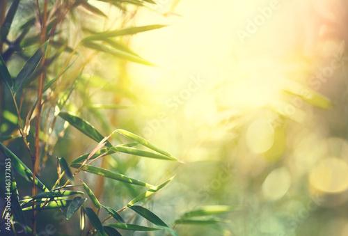 Fotografía Bamboo forest. Growing bamboo in japanese garden