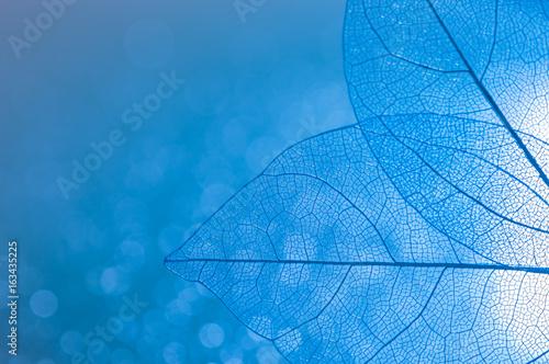 Transparent skeleton leaves closeup of blue color with Boke. Beautiful artistic image. Skeletal leaves. Selective focus.
