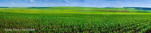 Photographie panoramic field of corn crops
