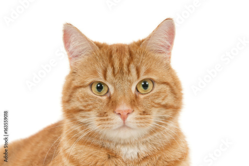 Slika na platnu Portrait of a looking ginger cat against a white background