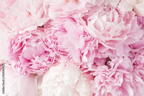 Fotografia beautiful pink peony flower background