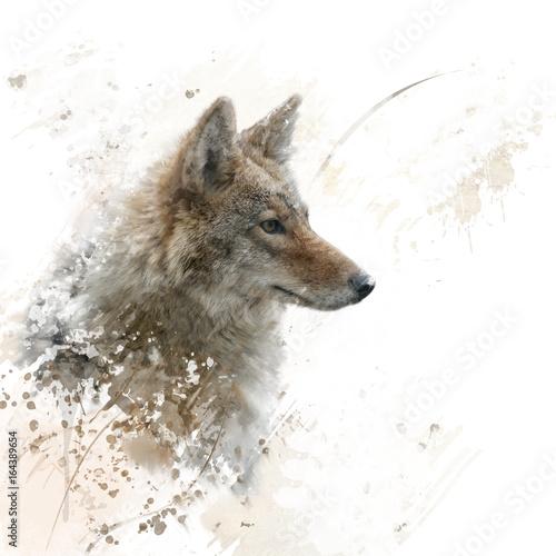 Zamknij się obraz z akwarela kojot