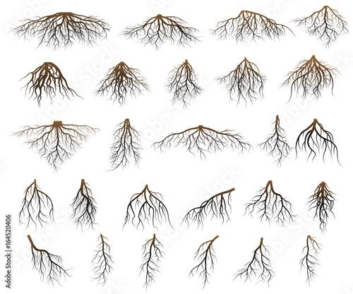 Photo Set of tree roots