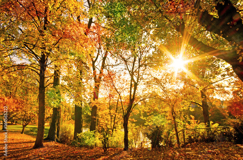 Invitation to dream, silence, relation, timeout, happiness: wonderful day in autumn forest :)