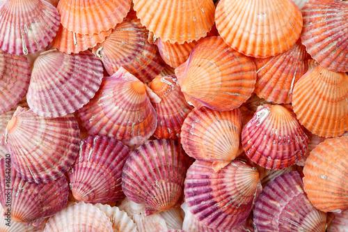 Fototapeta Bright colorful summer background from scallop sea shells