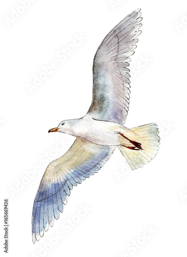 Canvas Print Watercolor seagull isolated on white background, hand drawn illustration