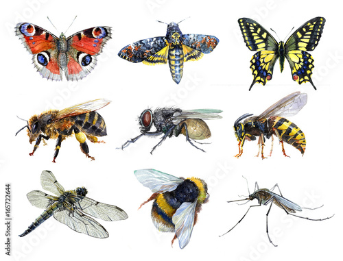 Stampa su Tela Watercolor set of insect animals wasp, moth, mosquito, Machaon, fly, dragonfly,