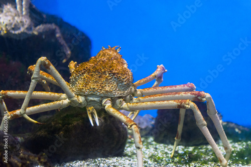 crab sea