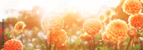 Canvas Print Wunderschöne Blumen im Sommer