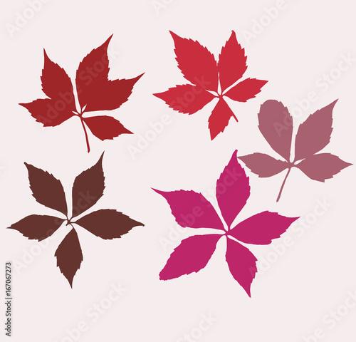 Obraz na płótnie Autumn virginia creeper leaves