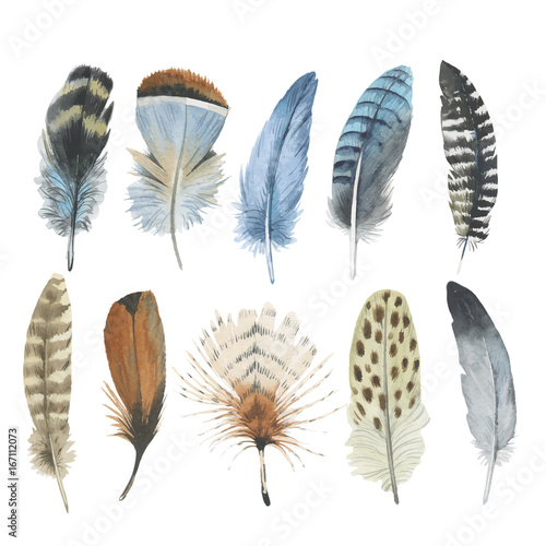 Fotografiet Vector bird feather from wing isolated